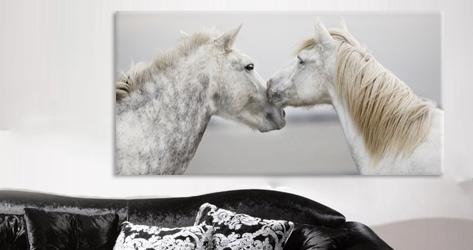 bilder von tieren und tiere kunst g nstig kaufen auf leinwand. Black Bedroom Furniture Sets. Home Design Ideas