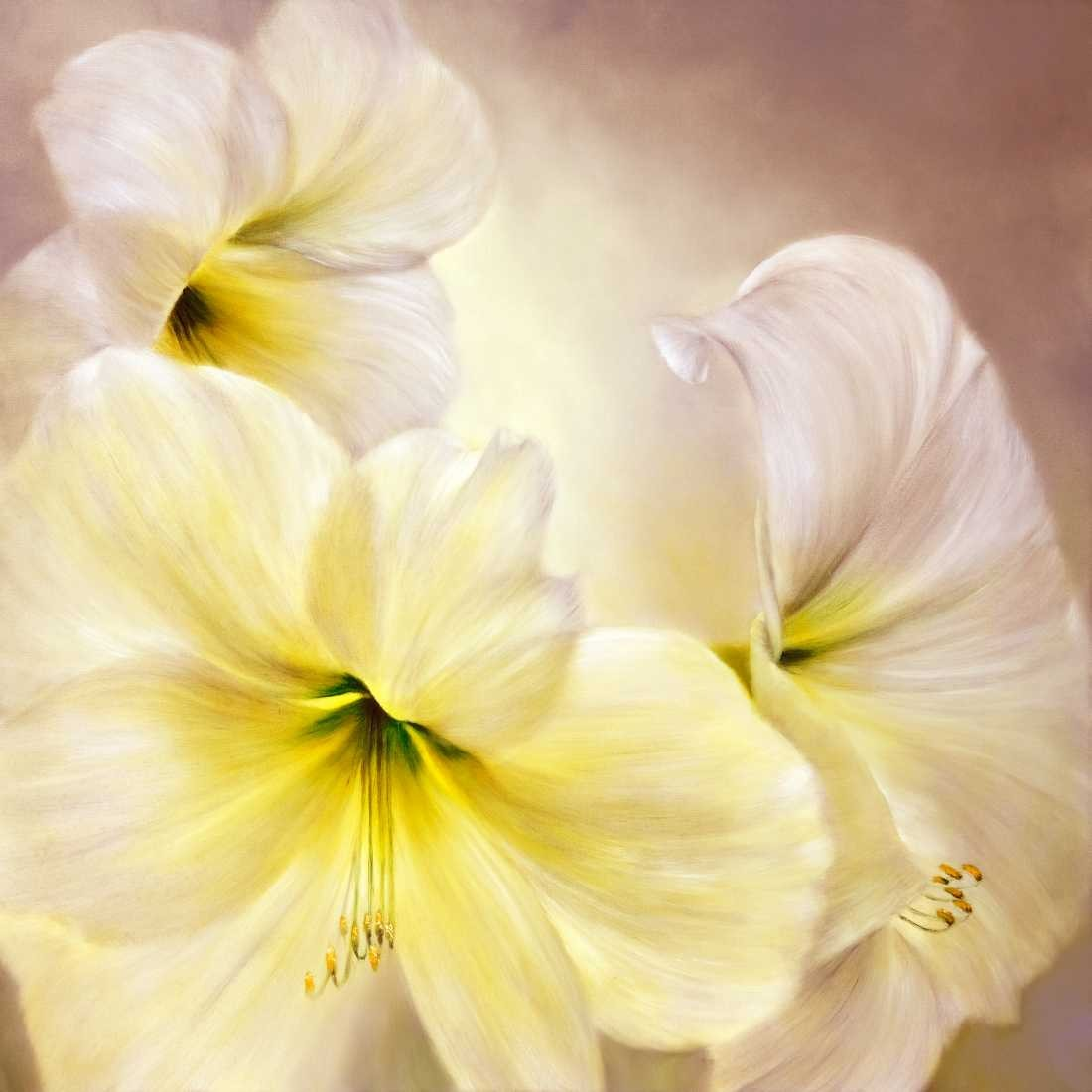 Konfiguration benutzen (Amaryllis, Blüten, Blumen, Pflanze, Blätter, zart, filigran, floral, Malerei, Treppenhaus, Schlafzimmer, Wohnzimmer, Wunschgröße, bunt)