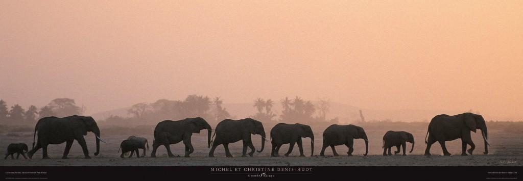 Kunstdruck Michel & Christine Denis-Huot, Troupeau d'éléphants - Kenya - Afrique