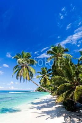 Beboy, seychelles plage cocotier (seychellen, strand, kokospalme, palme, ozean, tropics, tropics, tropisch, tropisch, exotismus, welle, meer, urlaub, vakanz, blues, türkis, himmel, paradiesisch, palme, bucht, insel, lagune, indianer, kokos, sand, weiß, reisen, sonne, körperhaltun)