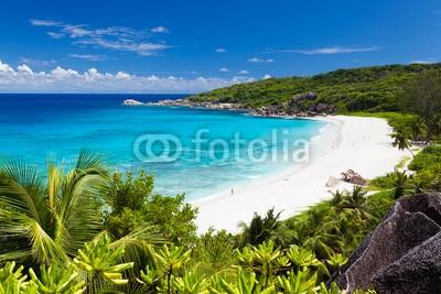 Beboy, seychelles plage (seychellen, strand, kokospalme, palme, ozean, tropics, tropics, tropisch, tropisch, exotismus, welle, meer, urlaub, vakanz, blues, türkis, himmel, paradiesisch, palme, bucht, groß, erwachsene, insel, lagune, indianer, kokos, sand, weiß, reisen, sonn)