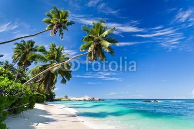 Beboy, seychelles plage cocotier (seychellen, strand, kokospalme, palme, welle, meer, ozean, tropics, tropics, tropisch, tropisch, exotismus, urlaub, vakanz, blues, türkis, himmel, paradiesisch, palme, bucht, insel, lagune, indianer, kokos, sand, weiß, reisen, sonne, körperhaltun)