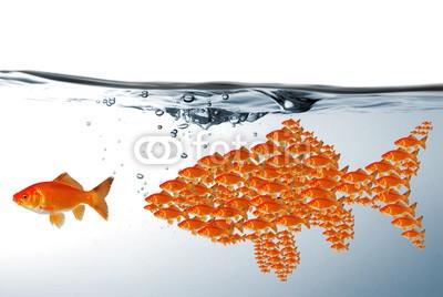WunderBild, Teamwork (anbieten, fisch, fisch, gefahr, kalender, safety, unterwasser, verlockung, abwarten, angelhaken, fisch, bedrohung, klug, kutsche, nachhilfe, bedrohung, fischzucht, gewinn, goldfisch, haken, hang, jagen, kommunikation, köder, köder, lernen, masche, mobbin)