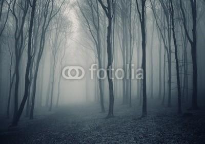 andreiuc88, elegant forest with fog (Wunschgröße, Fotografie, Photografie, Landschaft, Wald, Waldweg,  Herbst, Nebel, Dunst, Natur, Stille, Bäume, Wohnzimmer, Wellness, Schlafzimmer, schwarz / weiß)