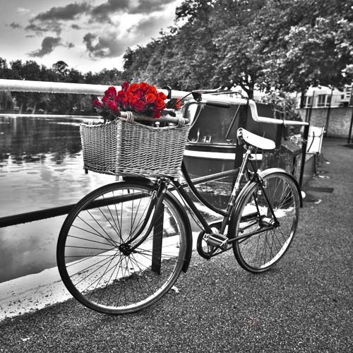 Assaf Frank, Romantic Roses I (Wunschgröße, Fotographie, Photokunst, Fotokunst, Colorspot,  schwarz/weiß, Landschaft, Fahrrad, Korb Wasser, rote Rosen, Wohnzimmer,)