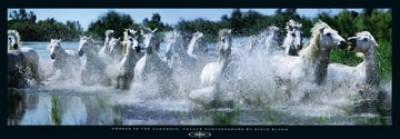 Steve Bloom, Horses in the Camargue (Fotokunst, Photokunst, , Fluss, Tiere, Fotokunst, Pferde, Wildpferde)