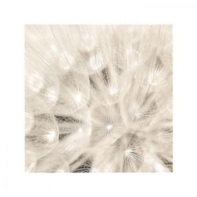 Adam Brock, On the Breeze (Pusteblumen, Nahaufnahme, Fotokunst, Botanik, Fallschirmchen, Treppenhaus, Wohnzimmer, Arztpraxis, schwarz/weiß)