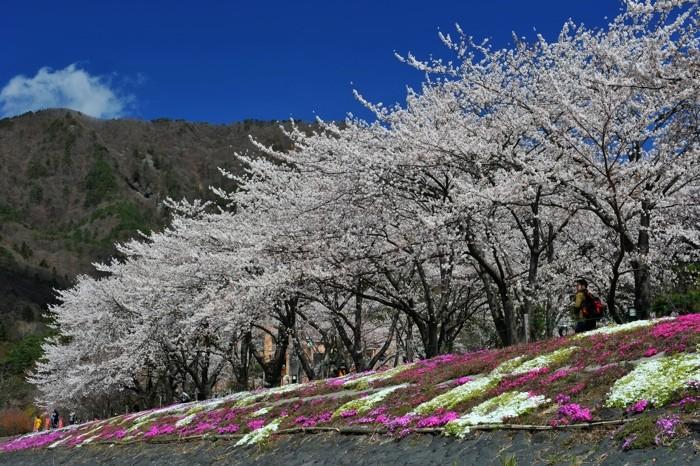 Hady Khandani, CHERRY BLOSSOM - LAKE KAWAGUCHI - JAPAN 1 (HADYPHOTO, Fotografie)