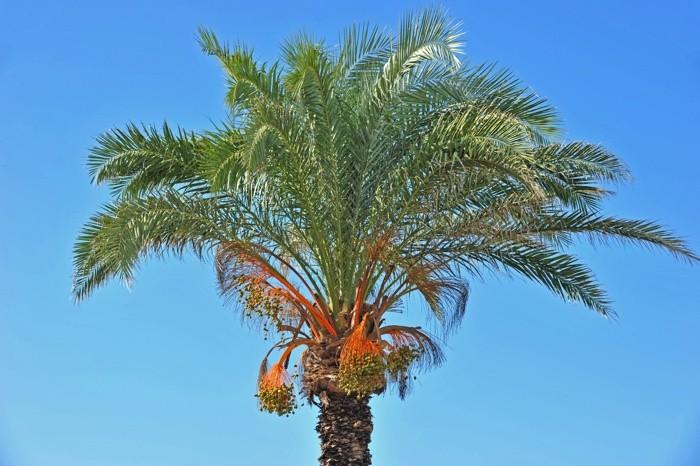 Hady Khandani, DATE TREE 1 (HADYPHOTO, Fotografie)