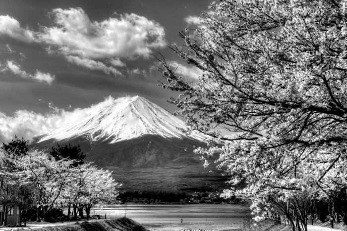 Hady Khandani, HDR MONOCHROME - MOUNT FUJI AND CHERRY BLOSSOM AT LAKE KAWAGUCHI - JAPAN (HADYPHOTO, Fotografie)