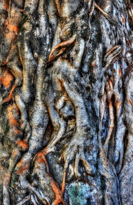Hady Khandani, HDR - OLD TREE (HADYPHOTO, Baumstamm, Rinde, knorrig, Nahaufnahme, Fotografie, Wunschgröße, Wohnzimmer, Treppenhaus, bunt)