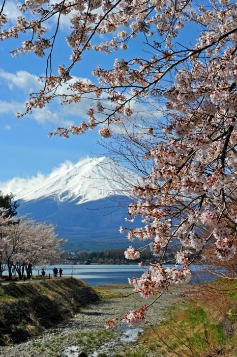 Hady Khandani, MOUNT FUJI - CHERRY BLOSSOM AT LAKE KAWAGUCHI - JAPAN 3 (HADYPHOTO, Fotografie)