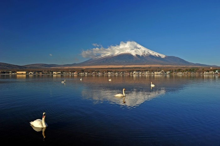 Hady Khandani, MOUNT FUJI - SWANS ON YAMANAKA LAKE - JAPAN 4 (HADYPHOTO, Fotografie)