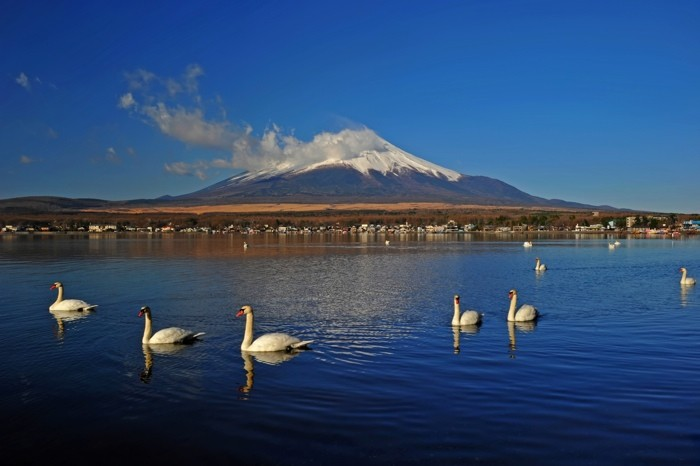 Hady Khandani, MOUNT FUJI - SWANS ON YAMANAKA LAKE - JAPAN 6 (HADYPHOTO, Fotografie)