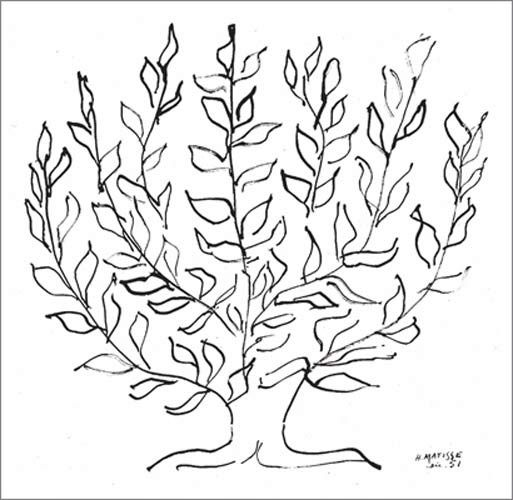 Line Drawing By Matisse : Wandbild henri matisse le platane