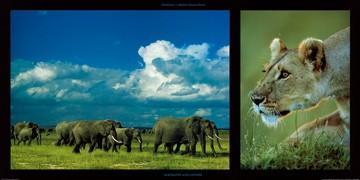 Michel & Christine Denis-Huot, Elephants and Lioness (Tiere, Elefanten, Herde,  Löwin, Jägerin, Raubkatze, Großwild, Afrika, Wohnzimmer, Treppenhaus, Fotokunst, bunt)