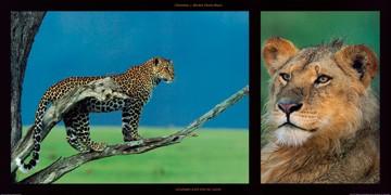 Michel & Christine Denis-Huot, Leopard and Young Leon (Leopard, junger Löwe, Tierportraits, Raubkatzen, Großwild, Afrika, Wohnzimmer, Treppenhaus, Fotokunst, bunt)