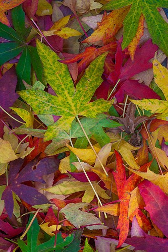 Norm Stelfox, Candy Leaves