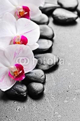 Pavel Timofeev, orchid (symbol, balance, die andere hochzeit, stabilität, pflege, kraut, massage, schwarz, treatment, schönheit, natürlich, haufen, frische, kieselstein, steine, pflanze, fels, konzept, reih, leaf, frisch, details, dekoration, kurort, zen, gesund, handvol)