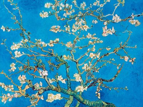 Vincent van Gogh, Almond Blossom San Remy 1891 (Wunschgröße, Malerei, Klassische Moderne, Impressionismus, Pflanze, Baum, Ast, Mandelbaum, Mandelblüte, Wohnzimmer, Schlafzimmer, Wintergarten, bunt)