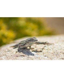 Ronny Behrendt, Geckos life