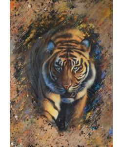 Jean-Marc Chamard, Tiger