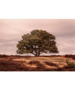 Sander Van Laar, Tree