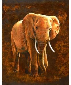 Jean-Marc Chamard, Elephant 01