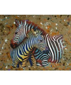 Jean-Marc Chamard, Zebras