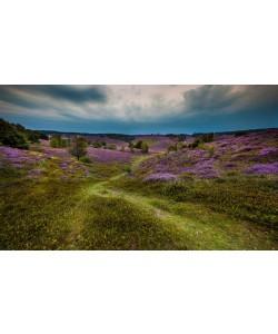 Sander Van Laar, Landscape in purple
