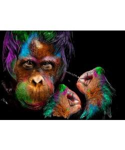Sander Van Laar, Monkey