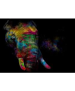 Sander Van Laar, Elephant