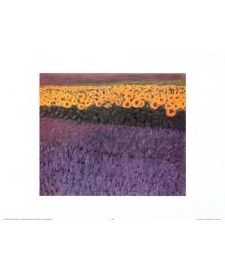Eleonore Baur-Brinkman, Sonnenblumen 2230