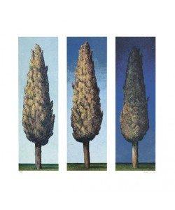 Rasch Folkert Zypressen Blau (1998) (Lithographie, handsigniert)
