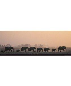 Michel & Christine Denis-Huot, Troupeau d'éléphants - Kenya - Afrique