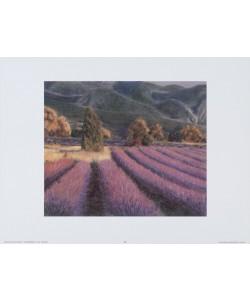 Eleonore Baur-Brinkman, Lavendelfelder 2231