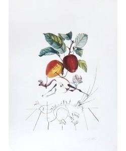 Dali Salvador Flordali Äpfel (20) (Radierung, handsigniert)