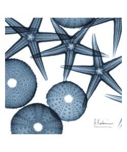 Albert Koetsier, STARFISH BLUE I