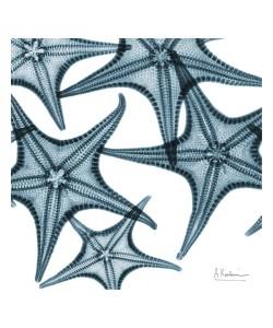 Albert Koetsier, STARFISH BLUE II