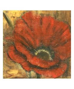 Linda Davey, RED POPPIE II