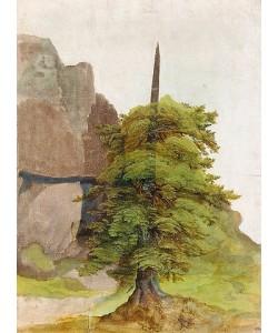 Albrecht Dürer, Baum. Um 1506