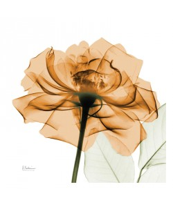 Albert Koetsier, FLOWERS IN ORANGE III