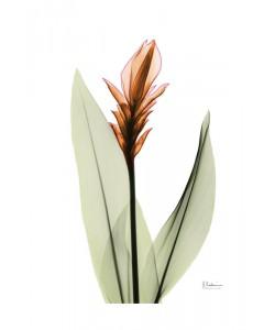 Albert Koetsier, FLOWERS IN ORANGE V