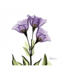 Albert Koetsier, FLOWERS IN PURPLE III