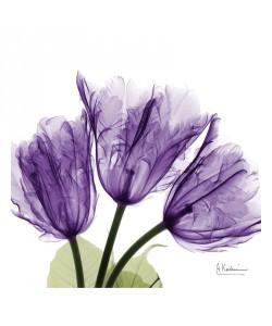 Albert Koetsier, FLOWERS IN PURPLE I