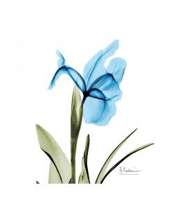 Albert Koetsier, BLUE TONE II