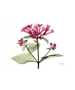 Albert Koetsier, FLOWERS IN BURGUNDY I