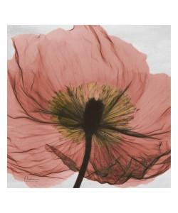 Albert Koetsier, FLOWERS IN RED VI