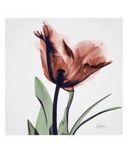 Albert Koetsier, FLOWERS IN PINK I