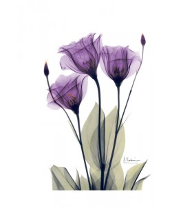 Albert Koetsier, FLOWERS IN PURPLE II